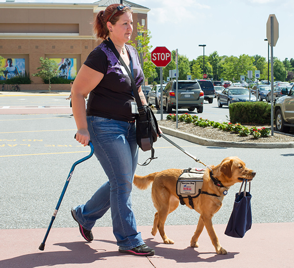 A new service dog team walking out of a store. The dog is holding a bag in its mouth.