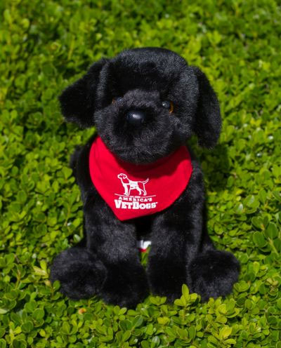 America's VetDogs Black Lab in Red Bandana