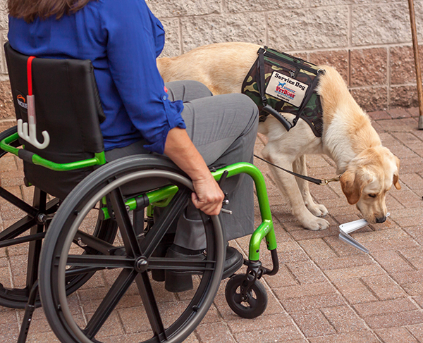 A service dog picking up a dropped item.