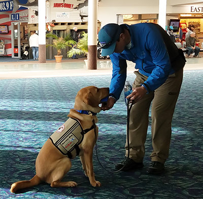A new service dog team working on new skills.