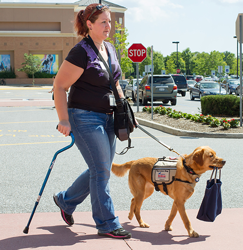 A service dog carrying a bag for its handler.