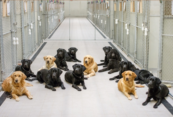 A group of dogs sit in the middle of the main kennel.