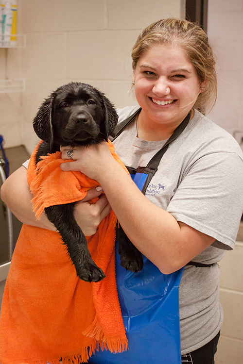 Canine Care associate bathing a puppy.