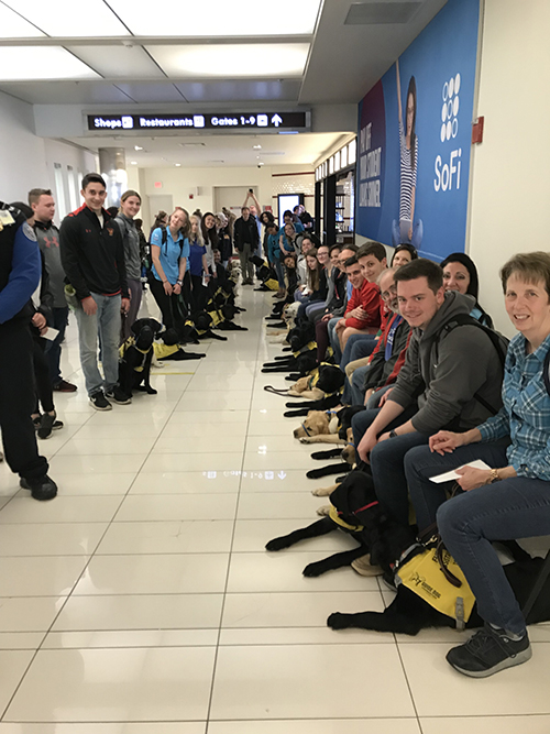 31 puppie and their raisers ready to board a plane.